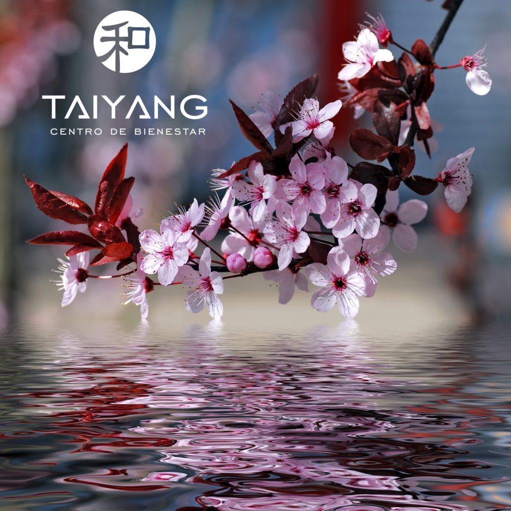 cerezo-aguas-taiyang-masaje-vigo